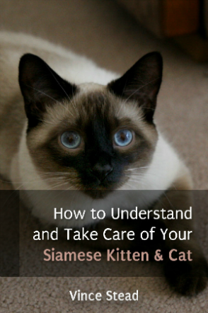 How to Understand and Take Care of Your Siamese Kitten & Cat